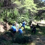 BNZ staff help clear weeds