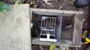 Picture of stoat trap